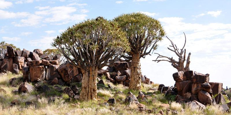 Quivertree Forest and Mesosaurus Fossiles