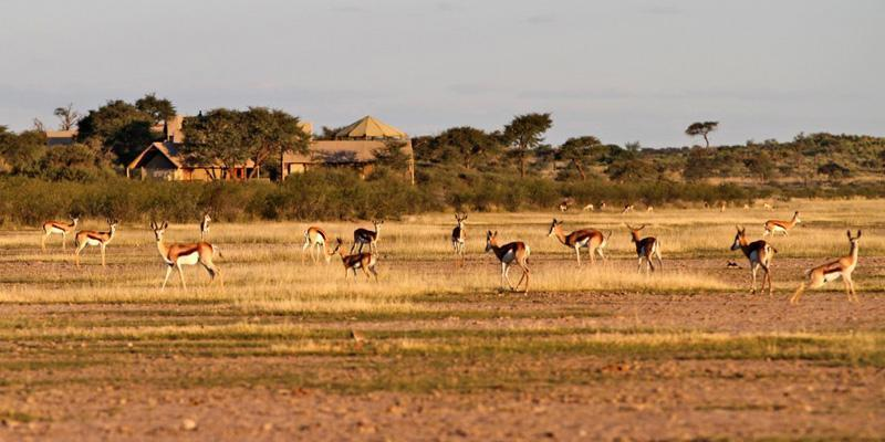 Suricate Kalahari Tented Lodge