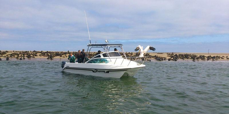 Boat tours in Namibia