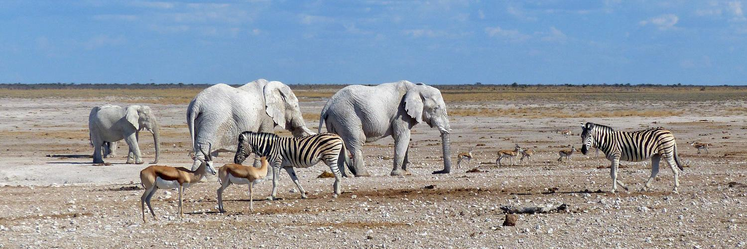 Rental Car Places >> Etosha National Park - One of the most popular wildlife reserves on earth