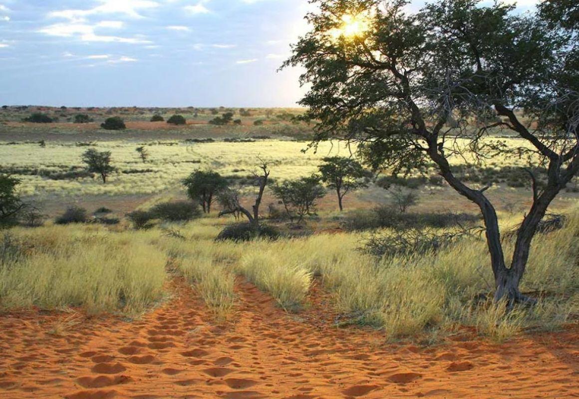 Kalahari kurz nach Sonnenaufgang