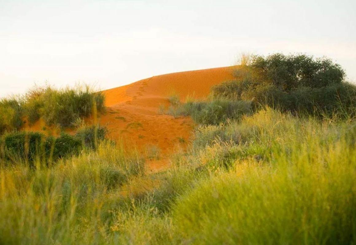 Orange-red dunes of the Kalahari