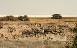 Etosha waterhole in the dry season