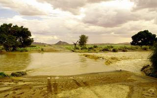 Rain in the Namib Desert in the record rainy season of 2010/2011